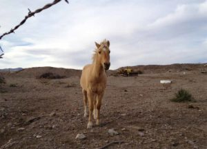 horse in Placitas