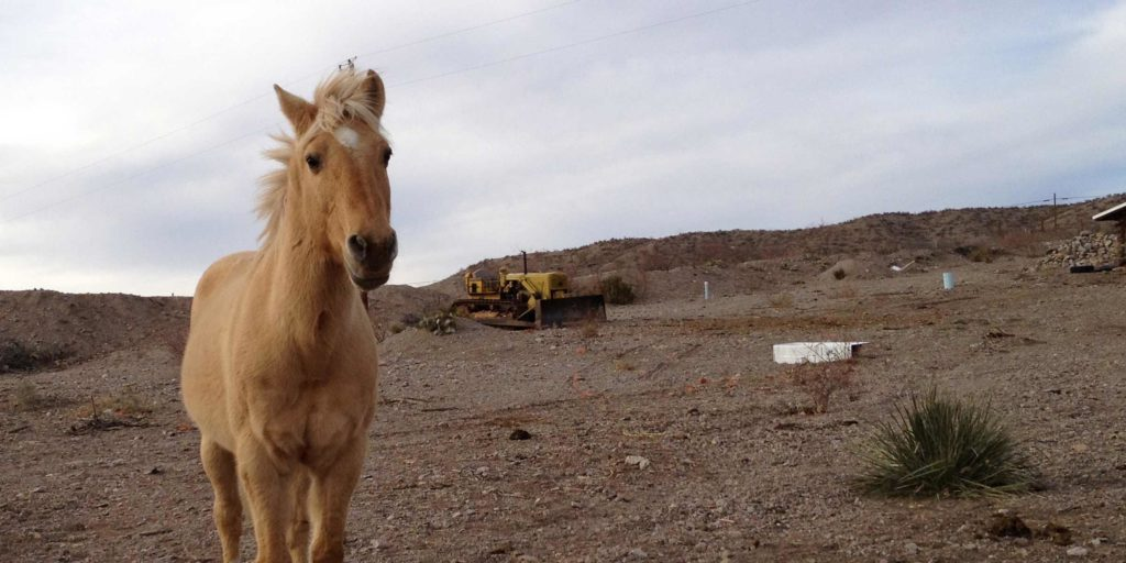horse in Placitas